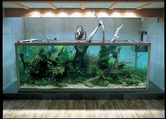 Huge Landscaped Fish Tank