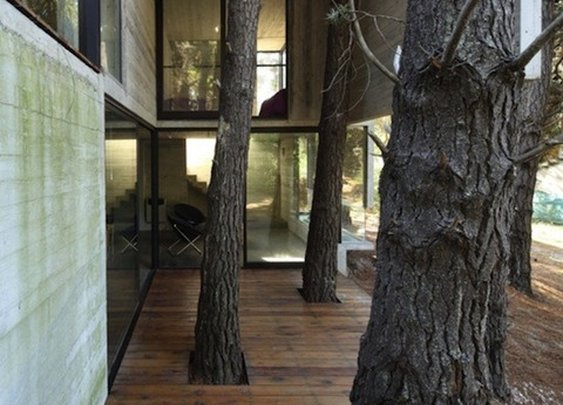 Trees Run Through It:  The Franz House