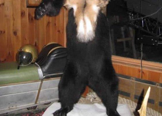 20 Awesome Taxidermy Animal Hybrids