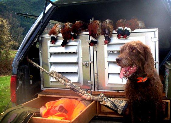 Pudelpointer + Shotgun = Pheasants for Dinner