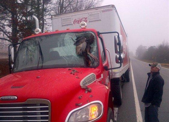 Wild Turkey & Coke can be dangerous