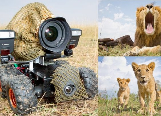 Incredible Lion Photos Taken with Camouflaged RC Camera Car, and More from TreeHugger