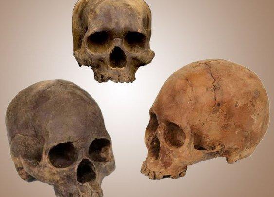 Human Skull Chocolates - DudeIWantThat.com