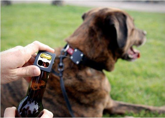 DOG COLLAR BOTTLE OPENER