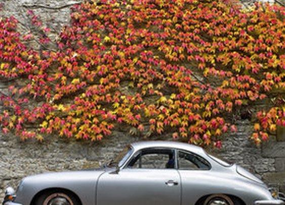 Porsche 356 Autum