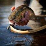 Fly Fishing Photography – Kurt Budliger Photography