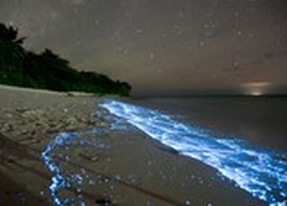 Pictures: Glowing Blue Waves Explained