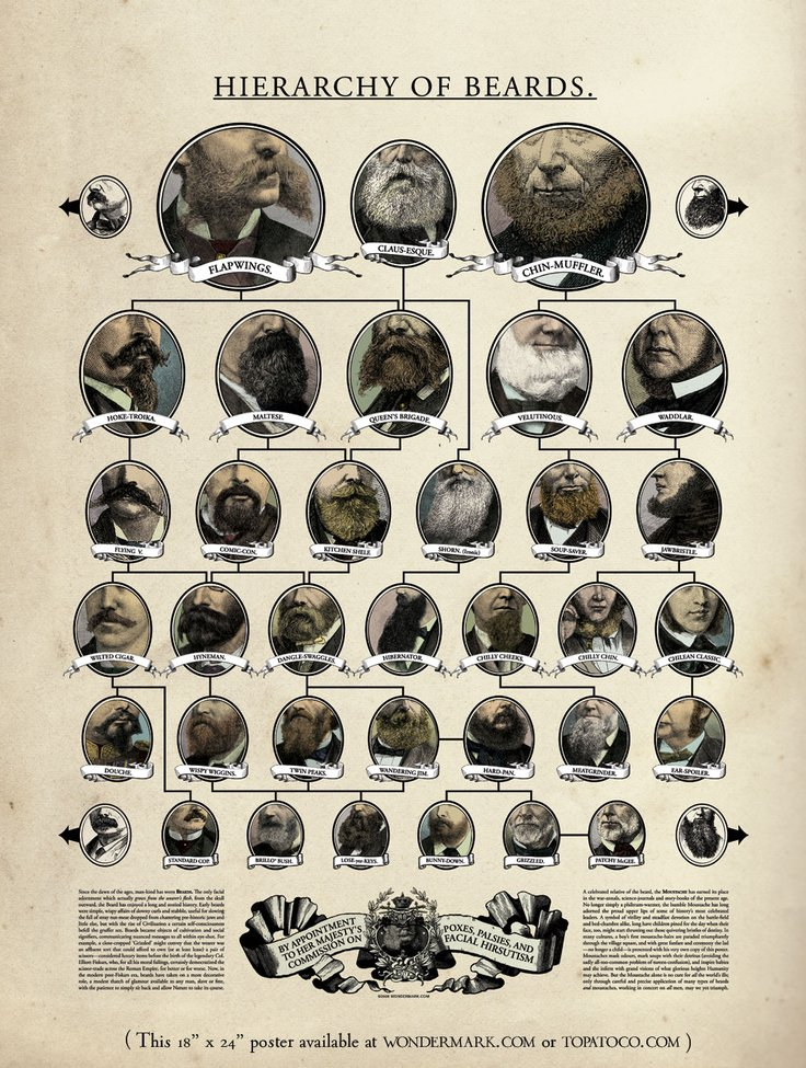 Hierarchy of Beards