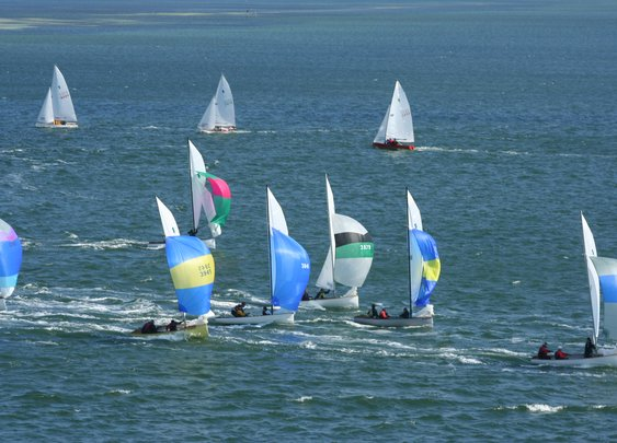 Spinnakers on Tampa Bay