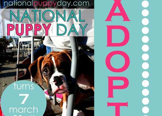 National Puppy Day! March 23rd! Celebrate the Puppy and shut down Puppy Mills!