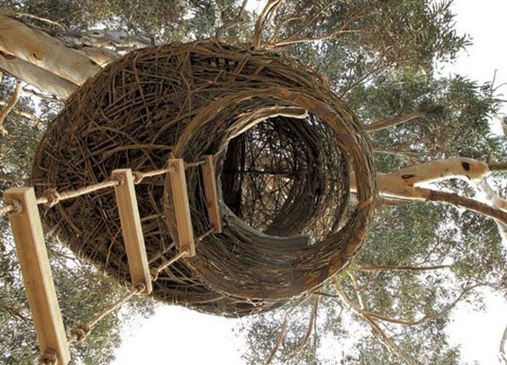 Human Nests