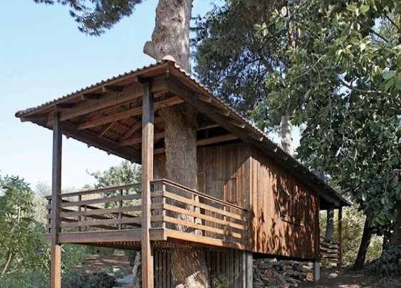 Shipping Container Into a Two-Tree House