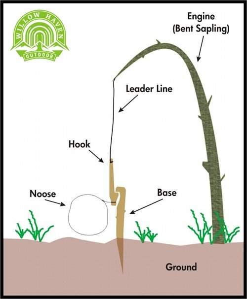 How to Build a Small Game Survival Snare | The Art of Manliness
