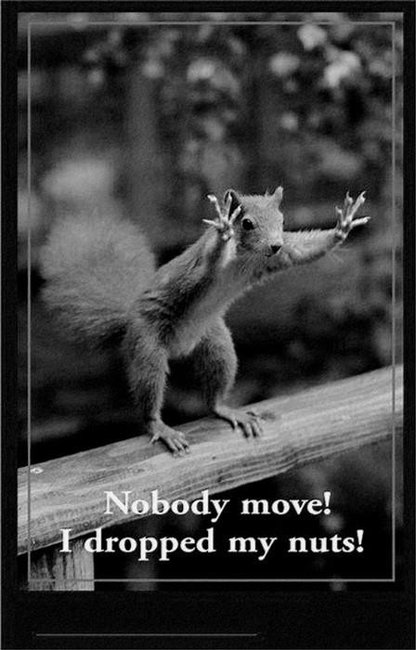 Nobody move, I dropped my Nuts !