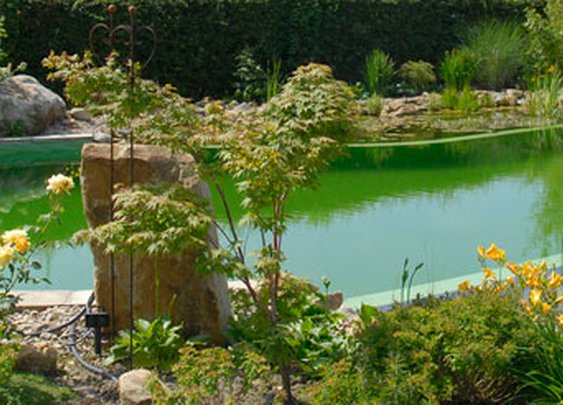 BIOTOP Natural Pool | Garden Ponds | Bio Pools