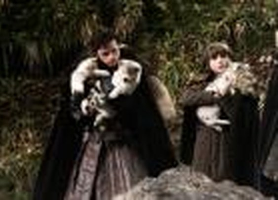 Direwolves - Game of Thrones Wiki