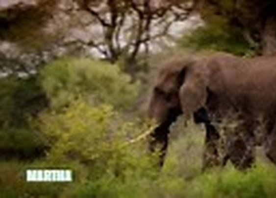 South African Safari - Martha Stewart TV