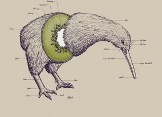 KIWI ANATOMY | MonkeyBait