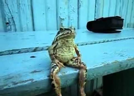 A Frog Sitting on a Bench Like a Human      - YouTube