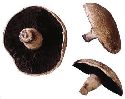 How To Cook Mushrooms As Hamburger Buns | LIVESTRONG.COM