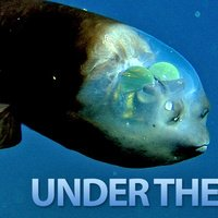 The Seven Weirdest Creatures Under the Sea
