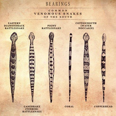 » Identifying Poisonous Snakes