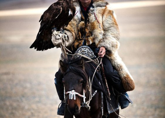 A mongolian hunter on a horse with a golden eagle.