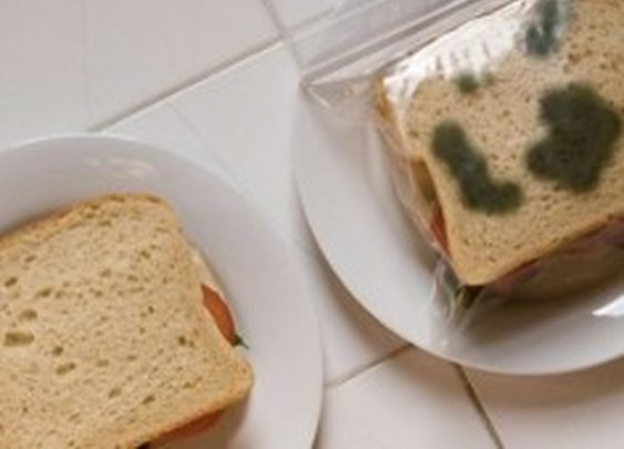 Anti-Theft Lunch Bags Make Your Sandwich Look Mouldy [Pics] - PSFK