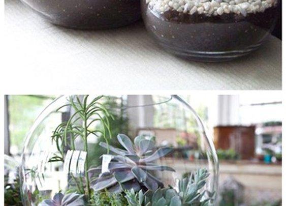 Gardening / Terrarium Inspiration