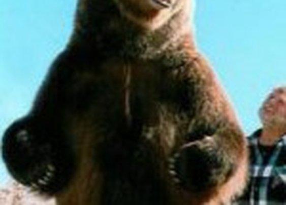The List: 10 Famous Bears