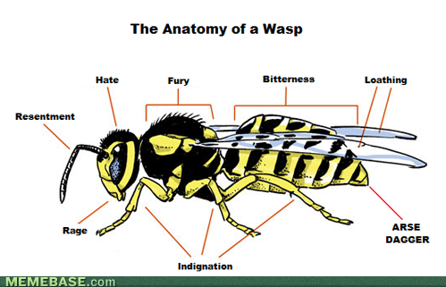 Graph of a Wasp, take a close look.