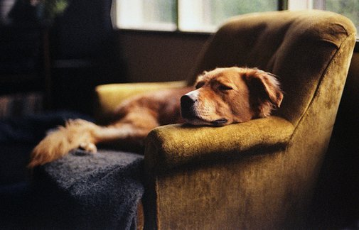 dreams of dogs | Flickr - Photo Sharing!
