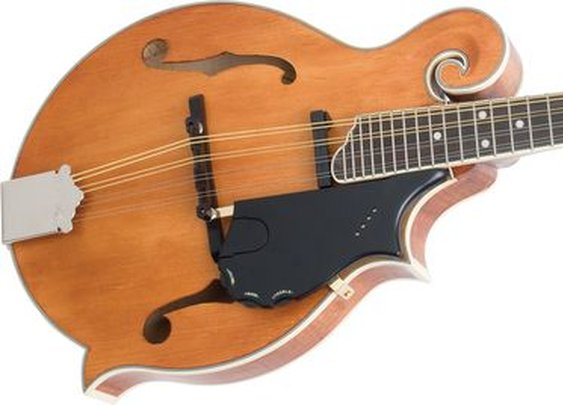 Epiphone MM-50E Professional Electric Mandolin | Musician's Friend