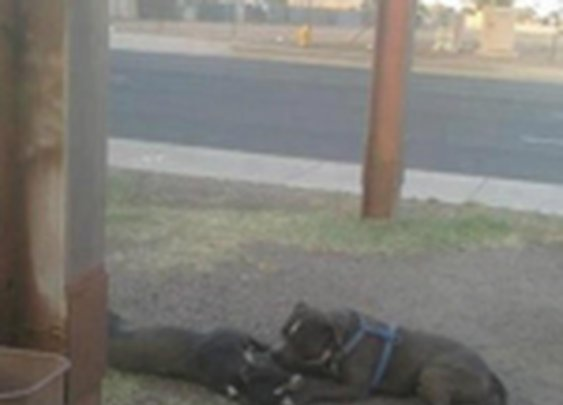 'Grieving' dog refused to leave dead dog's side | The Sideshow - Yahoo! News
