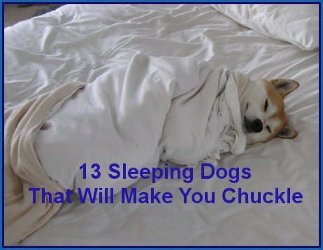 13 Sleeping Dogs That Will Make You Chuckle