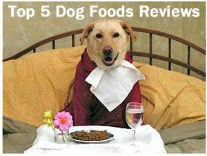 The Top 5 Dog Foods: Dog Food Reviews 2012