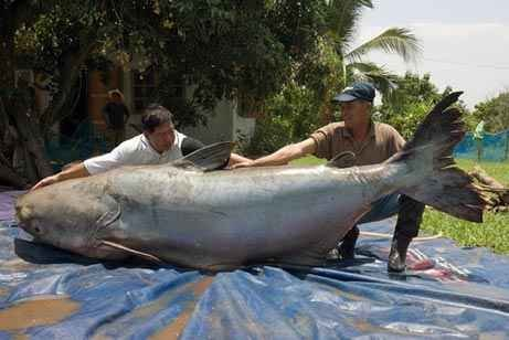 9 Largest Sea Creatures Ever Caught - Discover Fishing BC