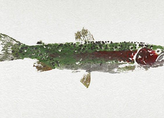 Rainbow Trout, Cooper Landing, Alaska (a gyotaku or fish rubbing)
