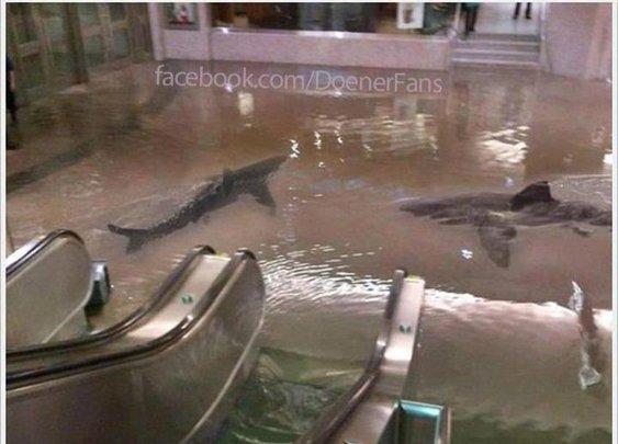 Dönerfans > Shark Döner
