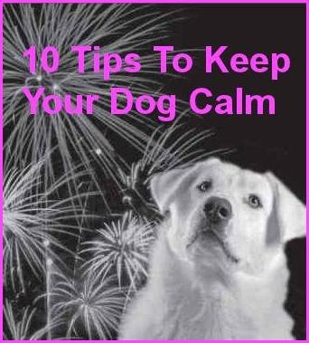 10 Tips To Keep Your Dog Calm During Fireworks This 4th of July