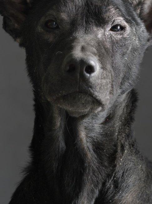 Clint Eastwood as a Dog