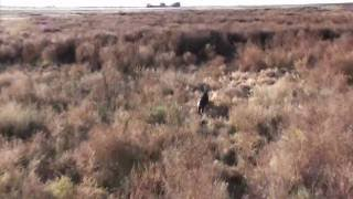 Cedar Ridge Aviation Helicopter Pig Hunt     - YouTube