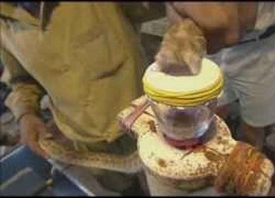 This is What Snake Venom Does to Blood!