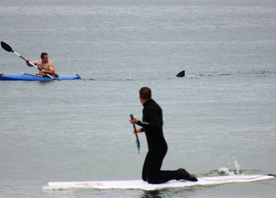 Great White Shark Follows Kayakers Off Cape Cod | Field & Stream