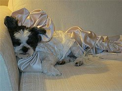 Dog Wedding Is Most Expensive Ever: Enters Guinness World Records
