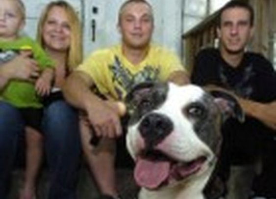 Pit Bull Saves Woman from Attacker in Home Invasion | Life With Dogs