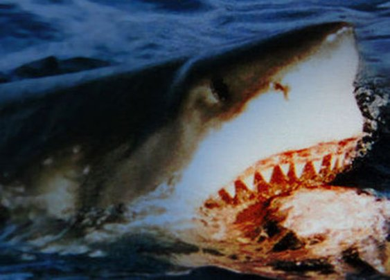 Why Sharks Don't Need To Brush