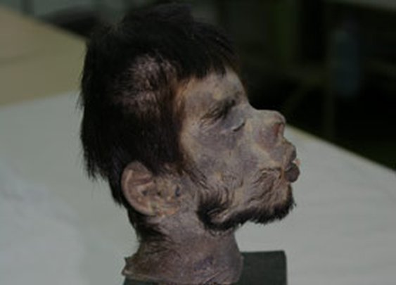 Shrunken Head DNA Proves Horrific Folklore True : Discovery News