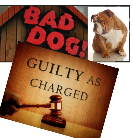 Bad Dogs, Bad Dogs, Whatcha Gonna Do? (VIDEOS)
