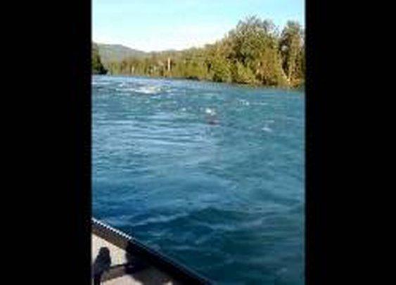 Kenai River Bear Cub Rescue - YouTube